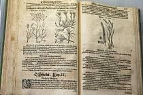 Výstava ke stoletému výročí založení České botanické společnosti dorazila do Brna. Od úterý si mohou návštěvníci prohlédnout zajímavosti z botanického světa v Moravském zemském muzeu.