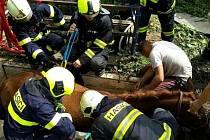 Kůň uvízl v Podolí v jímce. Vyprostit jej museli hasiči.