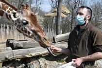 Z pohodlí domova se lidé potěší pohledem na zvířata z brněnské zoo.