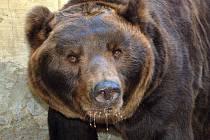 Otevření Beringie v brněnské Zoo.