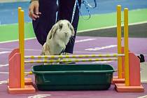 Specialitou letošního ročníku bude soutěž v králičím hopu.
