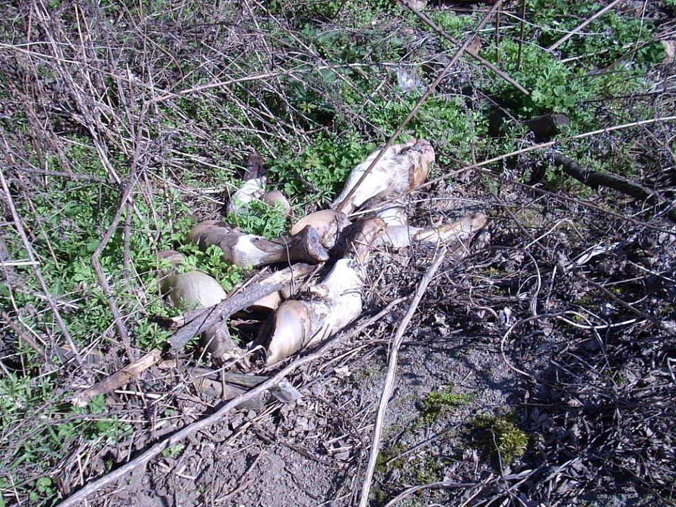 Kusy zvěře ležely nedaleko od polní cesty.