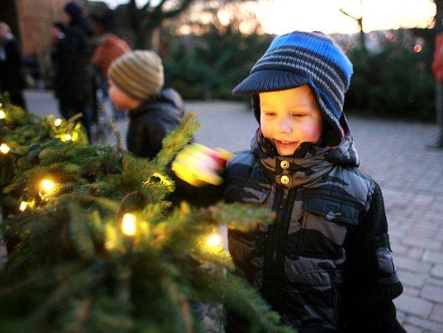 Vánoční strom rozzářil brněnskou zoo.