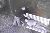 Třiadvacetiletý mladík se nejprve chvíli jen tak procházel kolem altánku v Denisových sadech, pak přišel k spícímu muži na lavičce a začal ho prohledávat.