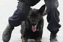 Zachránce zraněného cyklisty - policejní pes Hank.