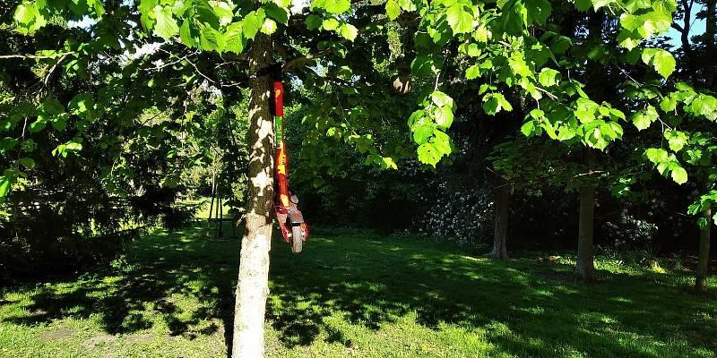Někteří uživatelé sdílené koloběžky parkují třeba do koruny stromů v brněnském parku Lužánky.