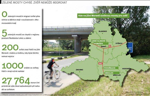 Jižní Moravou prochází významné migrační trasy zvěře. Přes dálnici se ale po takzvaných zelených mostech nedostanou. Žádné tam nejsou.