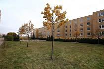 Panelové domy jsou na Vinohradech opravené, teď se obyvatelé těší také na úpravu zeleně.