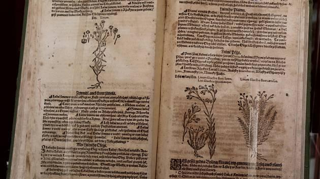Čtyři herbáře mohou zájemci zhlédnout na výstavě Botanického oddělení Přírodovědného muzea Moravského zemského muzea Brno od úterka do 6. srpna v Dietrichsteinském paláci na brněnském Zelném trhu.