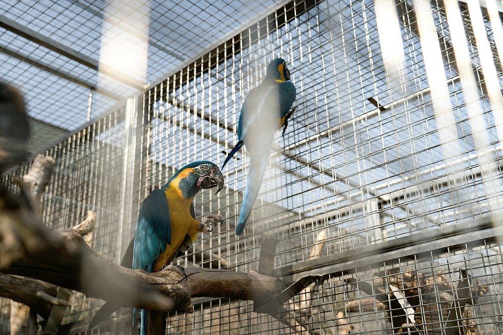 Papouščí zoo v Bošovicích na Vyškovsku. Zoologické zahrady nesmí návštěvníky vpustit do vnitřních expozic.