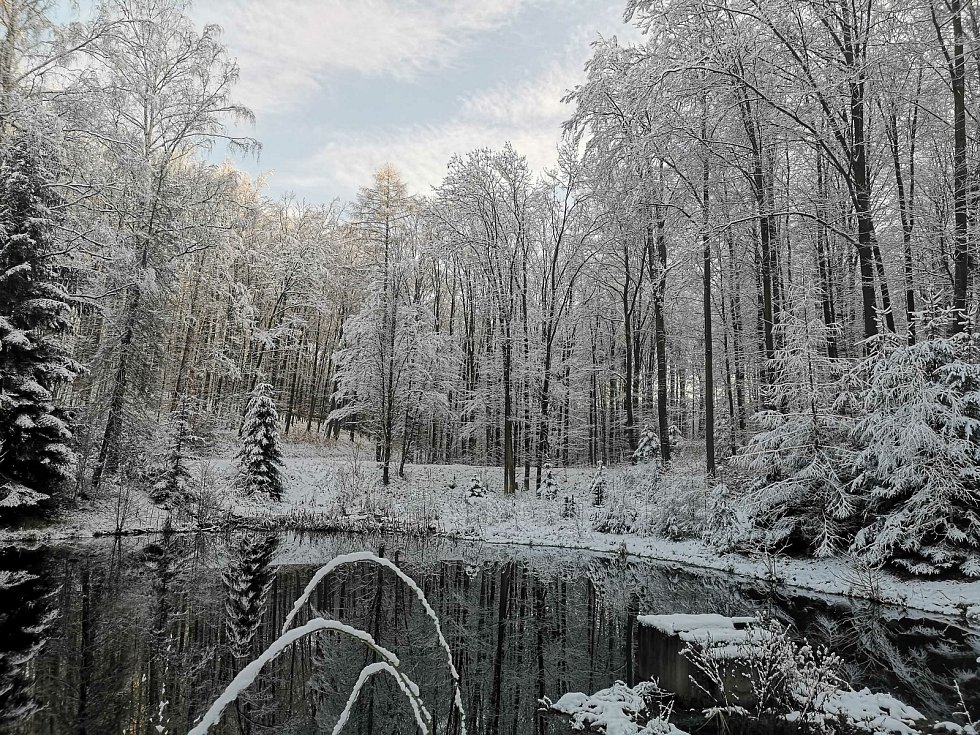 Lesní cesta Schindlerova a pohled na horní retenční nádrž.