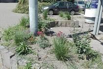 Již několikátý případ krádeže zasazených květin řeší místní v Židenicích.