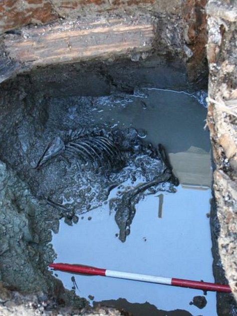 Pes, pocházející ze 13. století, ležel na dně studny.