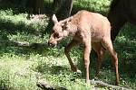 Brno 23.6.2020 - mláďata v brněnské zoo