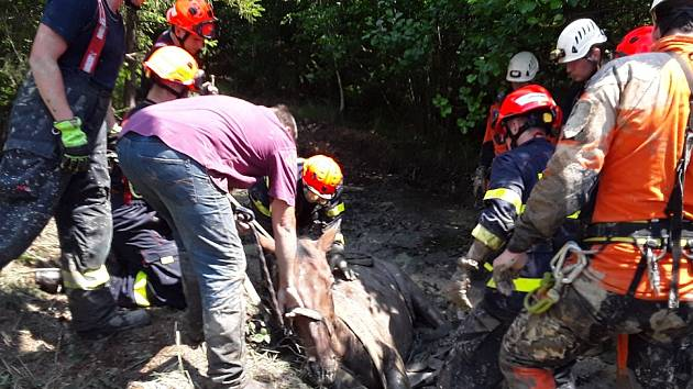 Drama na Brněnsku: Kůň zapadl do bažiny, hasiči ho vysvobozují už tři hodiny