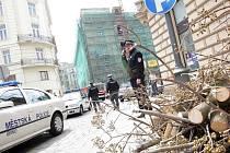 Spadlý strom na Šilingrově náměstí v Brně.