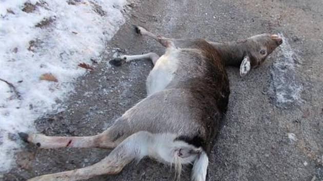 Volně puštěný pes ve středu odpoledne uštval a poté zakousl březí srnu v brněnském Údolí oddechu.