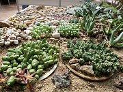 Výstava kaktusů a sukulentů v botanické zahradě.