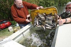 Podle odhadů rybářů je v brněnské přehradě pět až osm tun ryb, které skončí v jiných vodách.