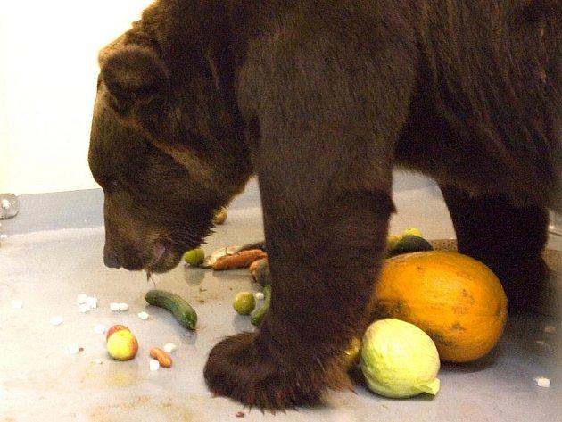 Kamčatský medvěd Jelizar.