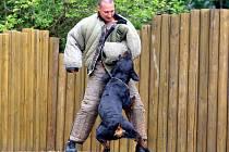 Ukázku práce psovodů městské policie a jejich zvířat zhlédnuli návštěvníci Zoo Brno.