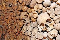POSKLÁDANÉ. Kosti budou v podzemí pod kostelem poskládané na hromadách. Některé další nálezy budou ve vitrínách.
