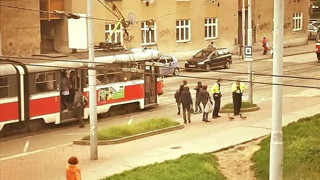Párek kačen se procházel ulicemi Brna. Samec skončil v síti, samice sama uletěla