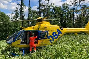 Na ženu spadl strom. Do lesa pro ni letěl vrtulník. Ilustrační foto.