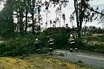 Zásah hasičů u spadlého stromu.
