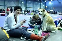 Mezinárodní výstava psů v Brně.