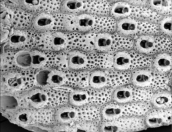 Kolonie mechovek.