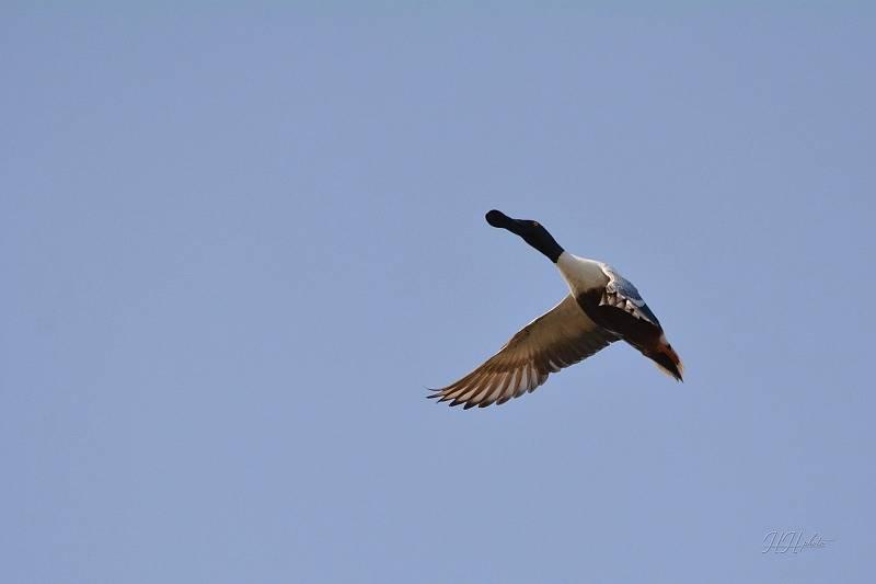 Zachycení ptáků v přírodě je pokaždé plné překvapení. Na snímku je