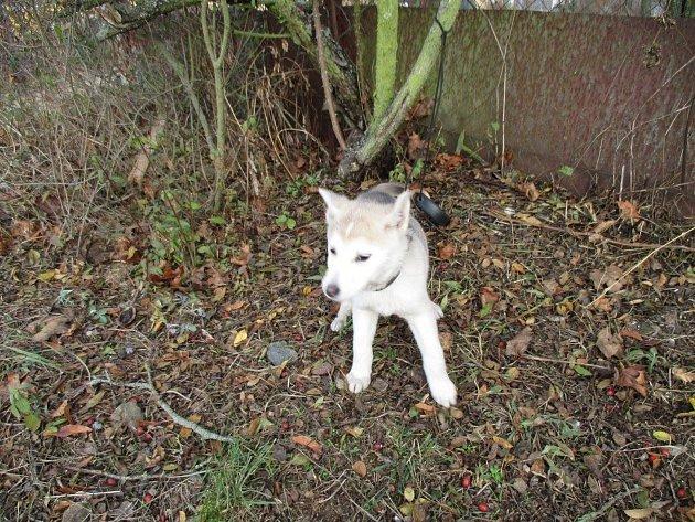 Milada Váňová spolu sdalšími lidmi ze spolku Můj pes a já - oba bez domova.