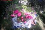 Na Moravském náměstí spala žena zakrytá peřinou a vedle sebe měla nákupní vozík plný květin.