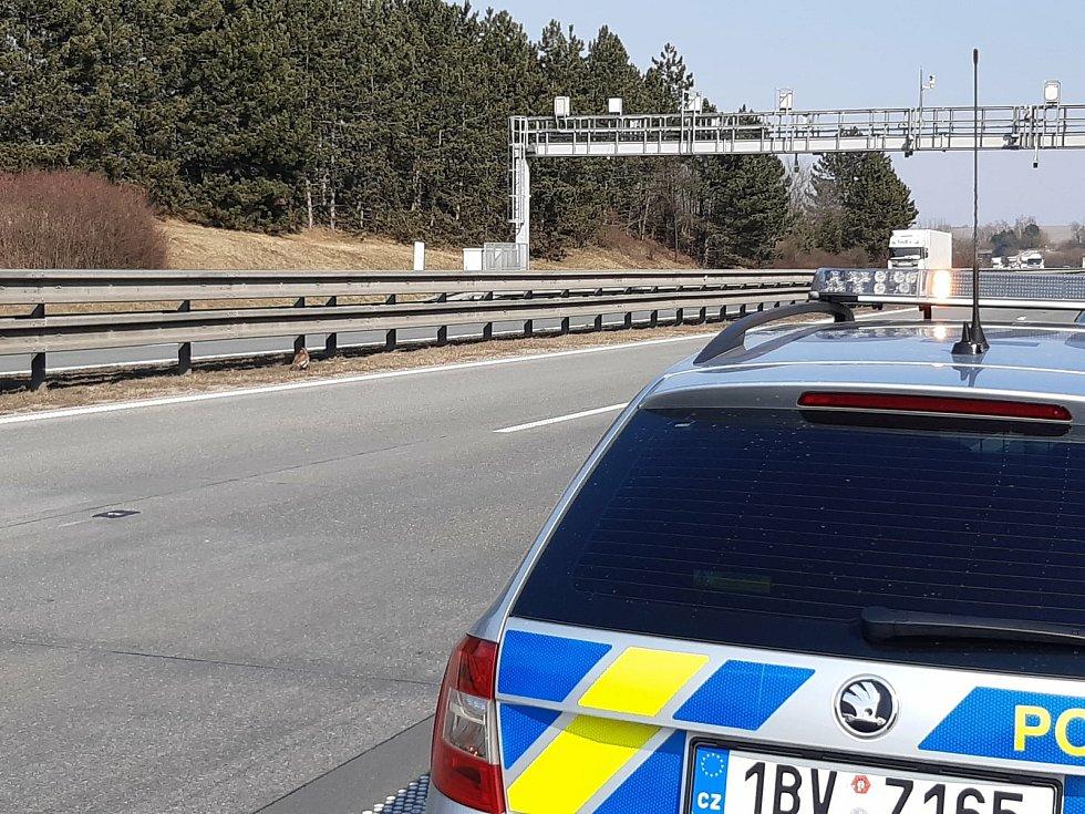 Krátké zastavení provozu na D1 u Rousínova si vyžádal zásah záchranářů ke káněti lesnímu s frakturou pravého křídla a odřeninou prstu.