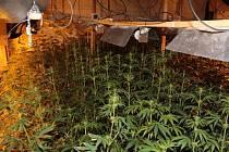 Přes dva tisíce rostlin konopí a téměř dvacet kilo usušené drogy našli policisté při středečním zásahu v jednom z domů v Blučině na Brněnsku.