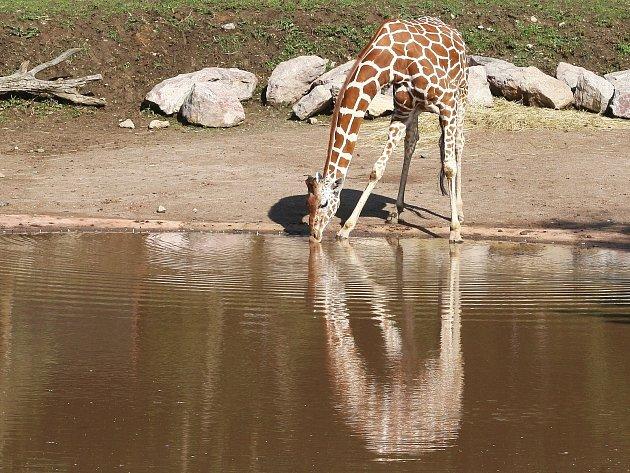 Africká vesnice v brněnské zoologické zahradě.