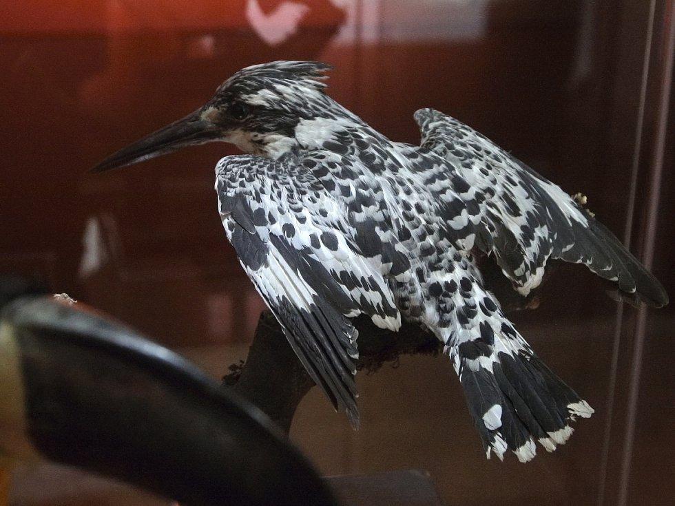Exponáty, kterými se pyšní Moravské zemské muzeum v Brně, sbírali odborníci v pralesech i za polárním druhem. V následujícím měsíci se v souvislosti s dvoustým výročím návštěvníkům muzea představí právě zoologické oddělení.