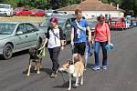 Na Brněnských psích dnech se o víkendu sešli psi všech velikostí i barev.
