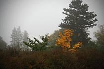 Na Kraví horu vedou často nejen podzimní procházky Brňanů. Míří sem i lidé z okolí.