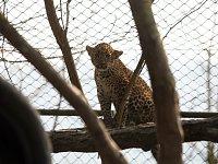 Levhartí mláďata dostala od svých kmoter jména Aruni a Ashango.