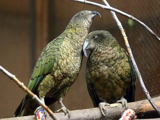 Papoušci z brněnské zoo.