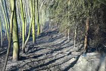 Požár lesa na Tišnovsku pomáhal hasit i vrtulník.