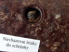 Stovka netopýrů se ve středu po deváté hodině dopoledne nastěhovala do bytového domu ve Střední ulici v Brně.