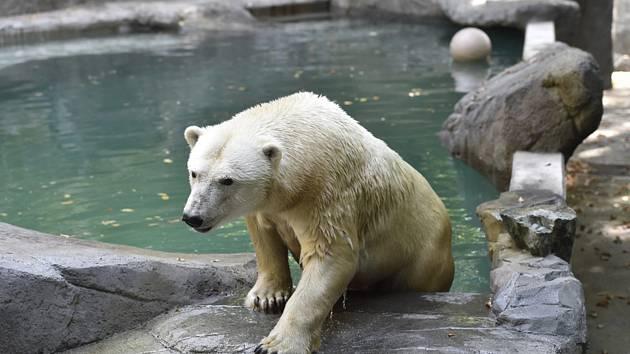 Otevírají se zoo. Vzhůru zpět za zvířaty. Lvíčatům koupí lidé vánoční dárky
