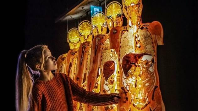 Jeden z exponátů výstavy Body Worlds.