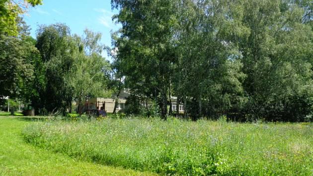 Relax pro lidi, ale i domov pro hmyz. Mozaikových sečí v parcích v Brně přibývá