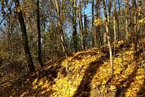 Příroda na podzim