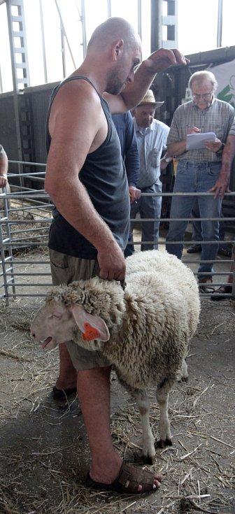 Ovčácké slavnosti spojené s výstavou ovcí a koz Ovenálie 2012 u Malhostovic.