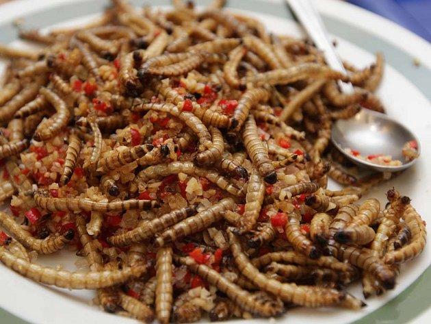 Všichni Brňané budou moci ochutnat netradiční kulinářské speciality.